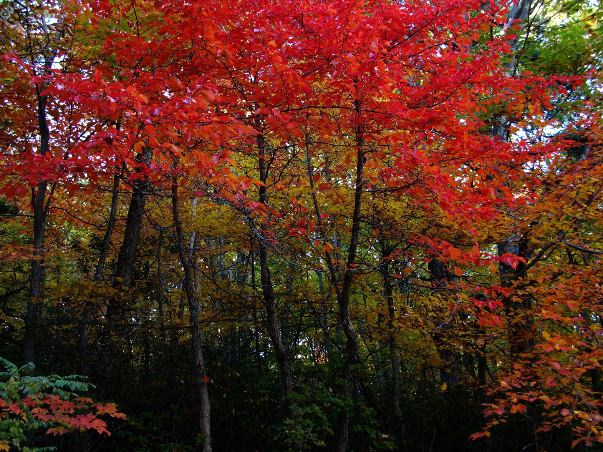 fall desktop background pictures free