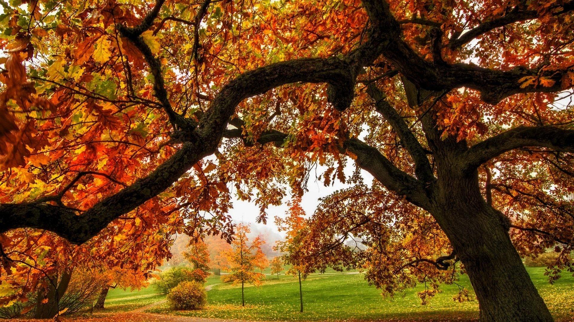 Colorful Fall Colors Forest Park Splendor Path Nature Walk Leaves Road  Trees Autumn Desktop Backgrounds – 1920×1324