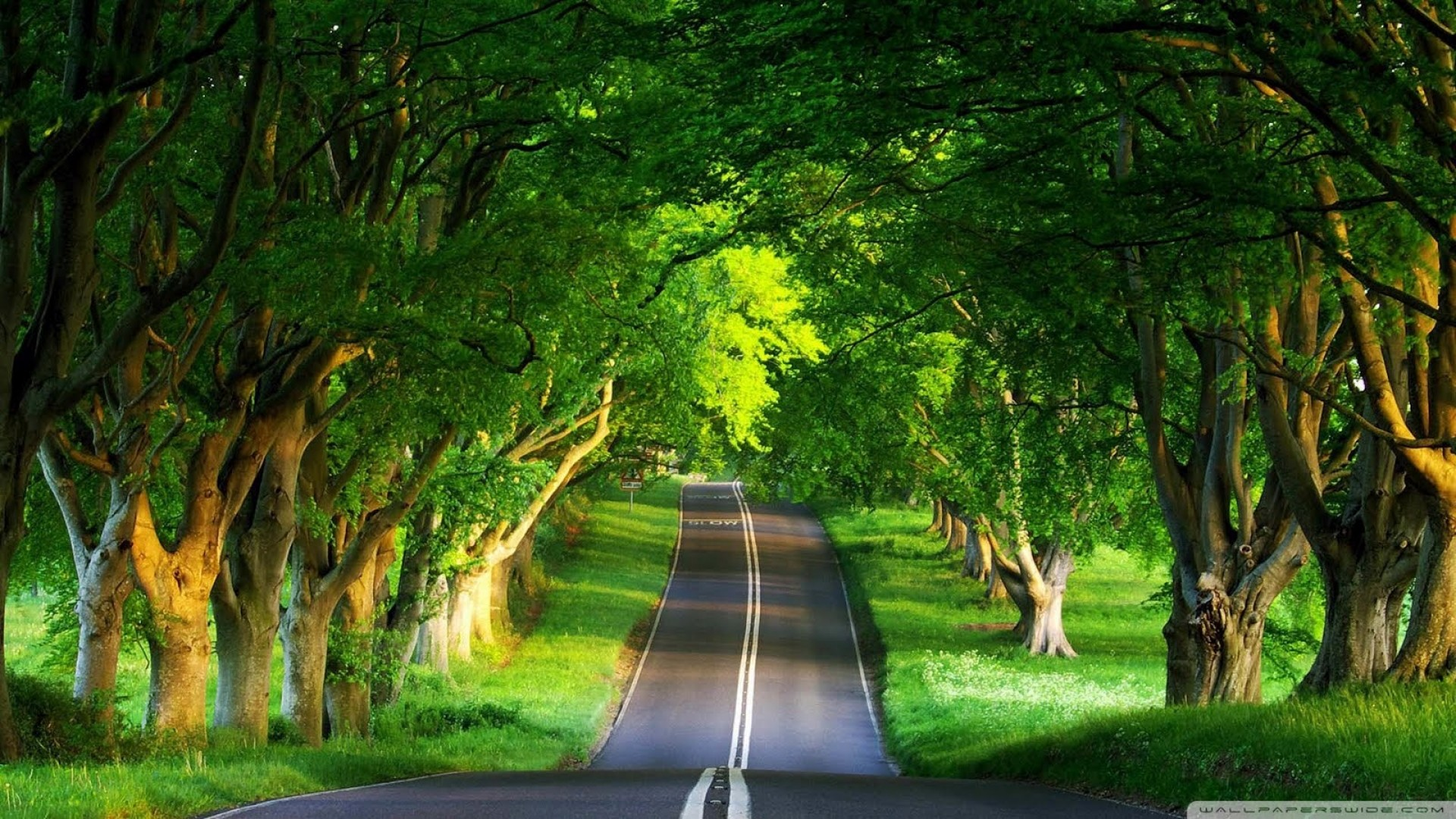 Beautiful Green Nature Way HD Wallpapers
