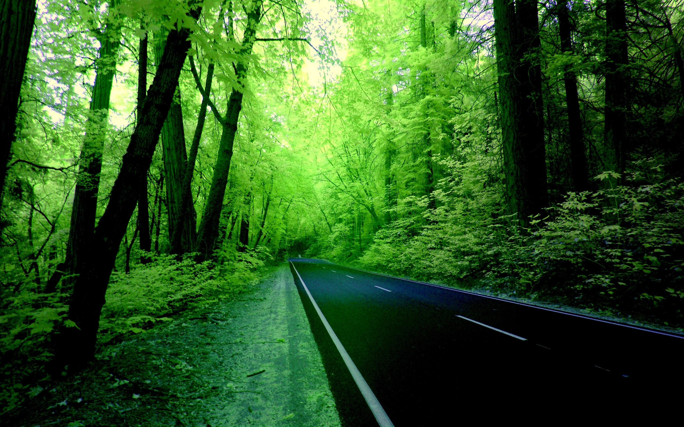 Green Forest Wallpaper Hd Background 9 HD Wallpapers