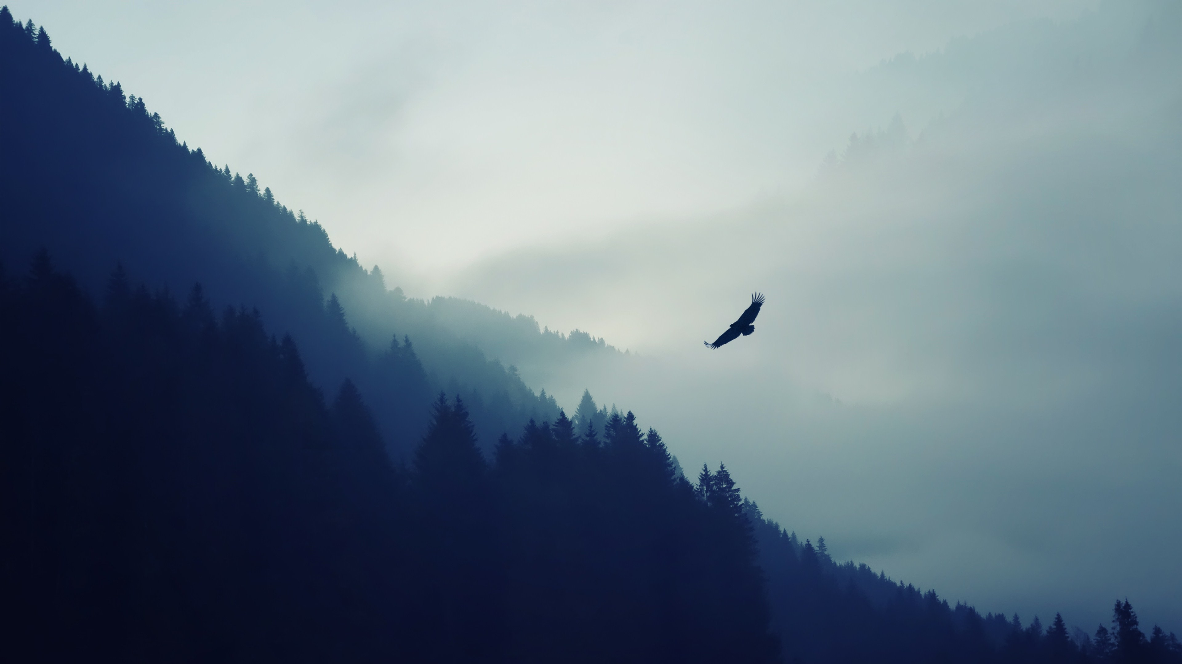 nature mountain eagle fog landscape ultrahd 4k wallpaper wallpaper