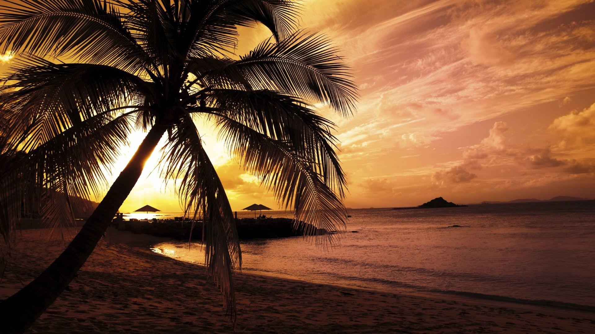 hawaii beach night