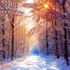 Wallpaper Winter Backgrounds