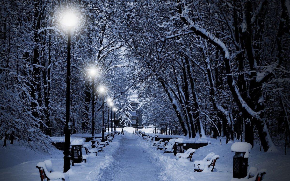 nature winter snow snowflakes snowing trees park white night .