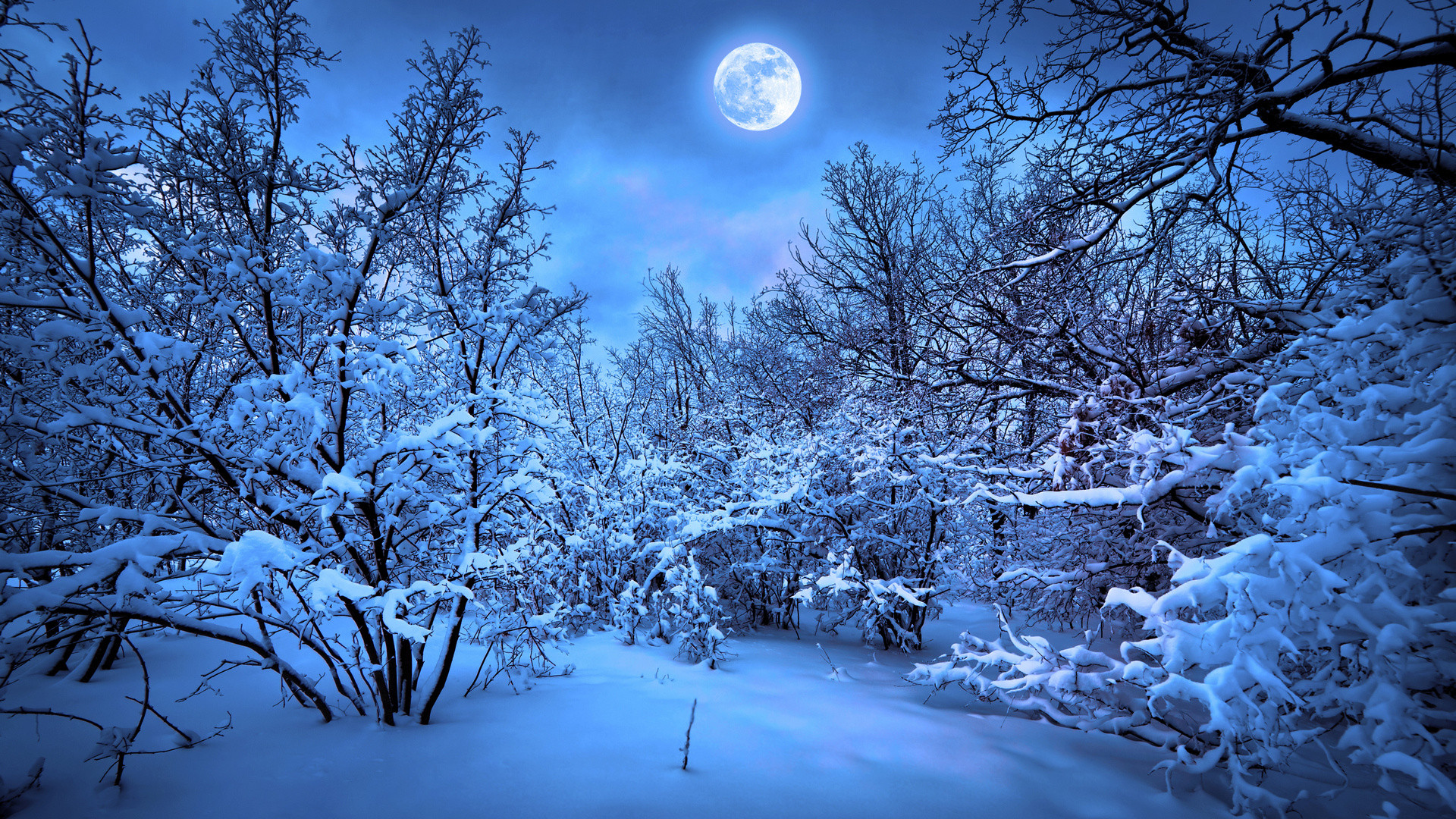 forest moon night snow winter f wallpaper background