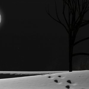 Desktop Wallpaper Snowy Night Scenes