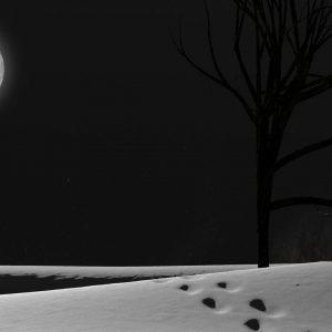 Desktop Wallpaper Snowy Night Scenes