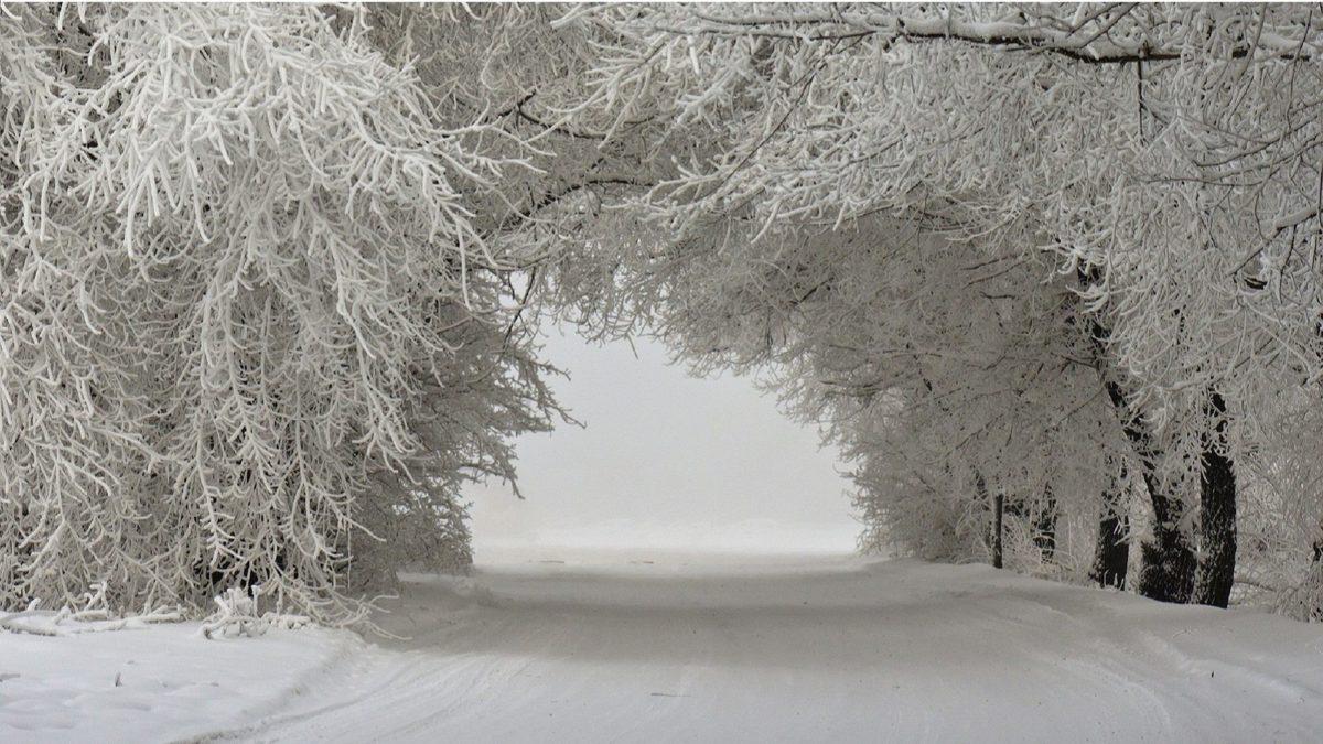 Winter – Snow Tunnel Street Trees Landscape Ice Wallpaper Winter Desktop  for HD 16:9