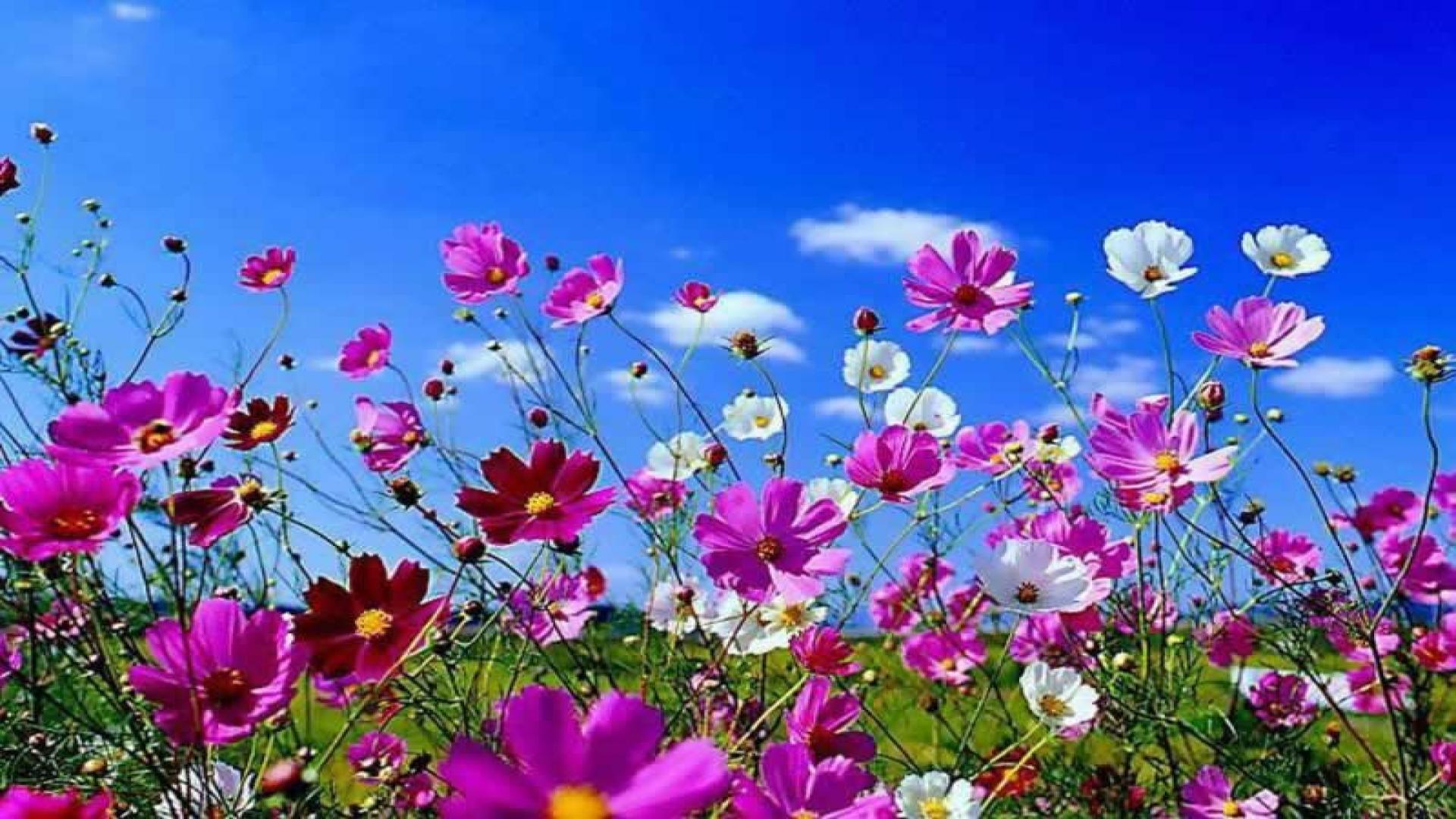 Seasonal Pictures for Desktop Wallpaper   Desktop Image