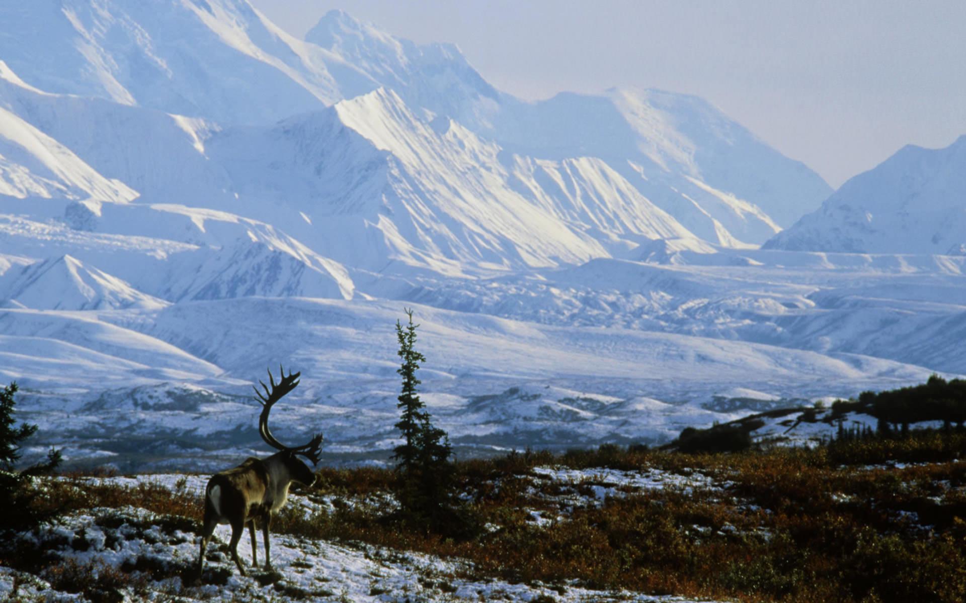 Photos of Seasonal in Widescreen