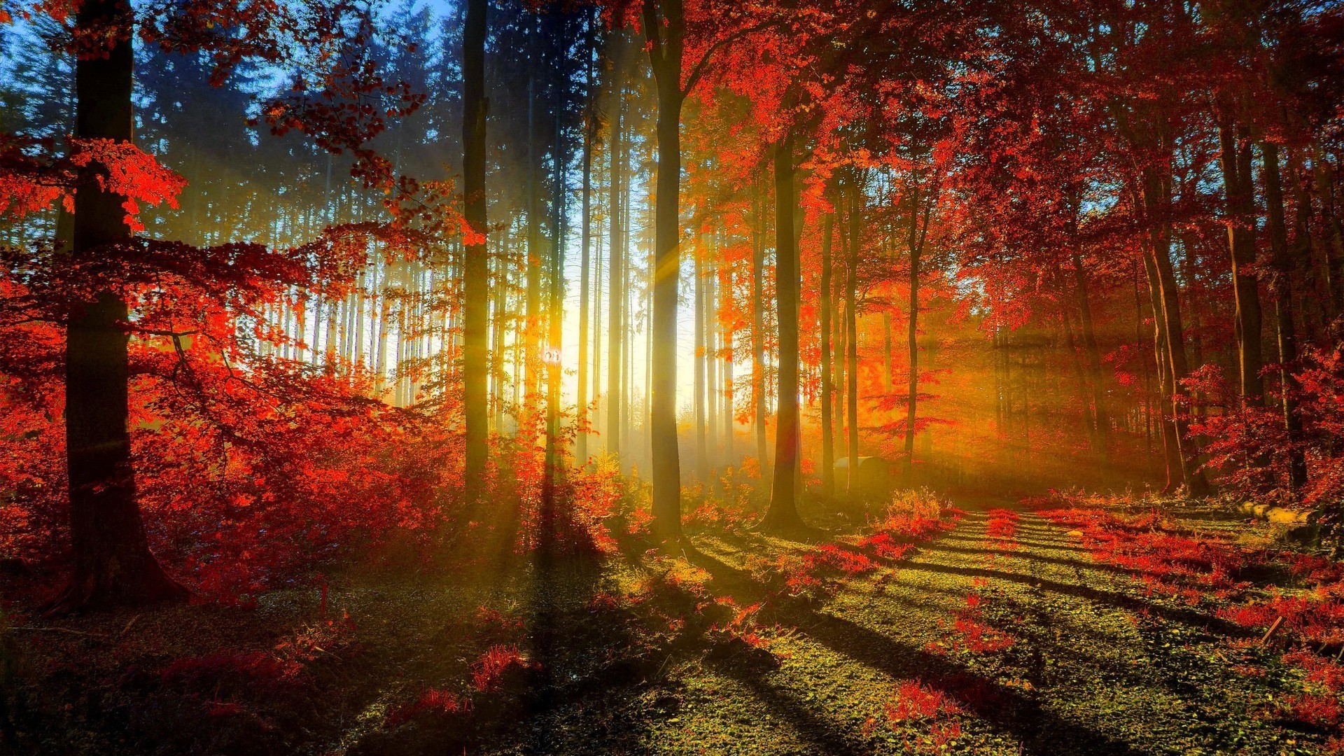 … Autumn trees and walking path wallpaper from PicsWalls …