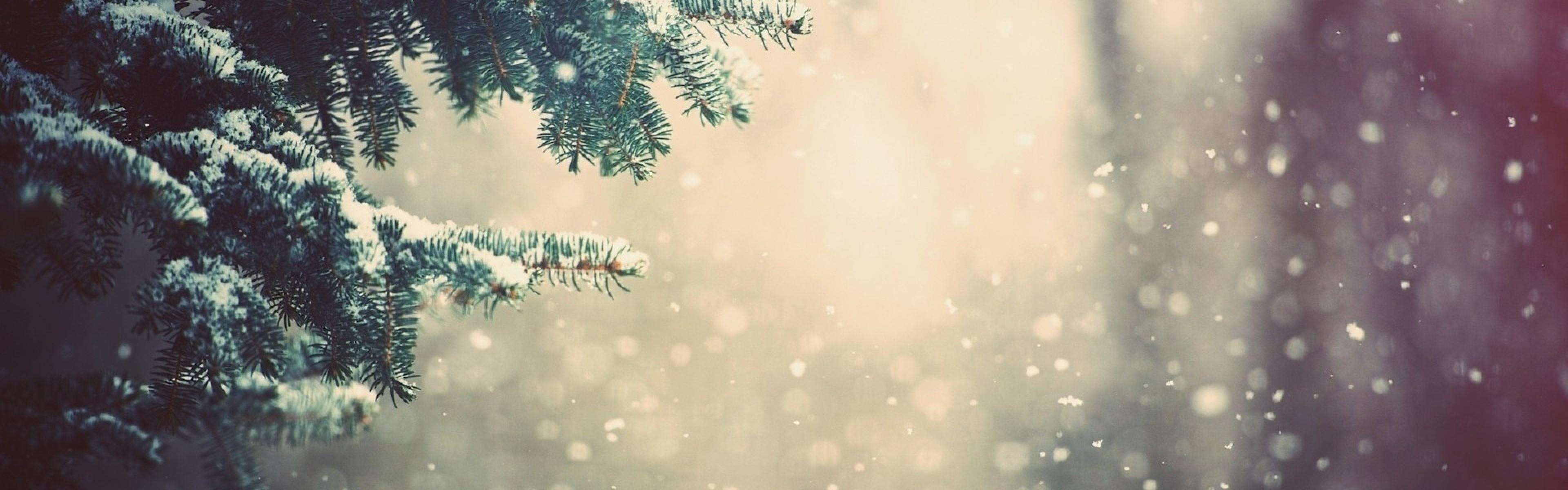 Preview wallpaper winter, spruce, branches, snow, glare 3840×1200