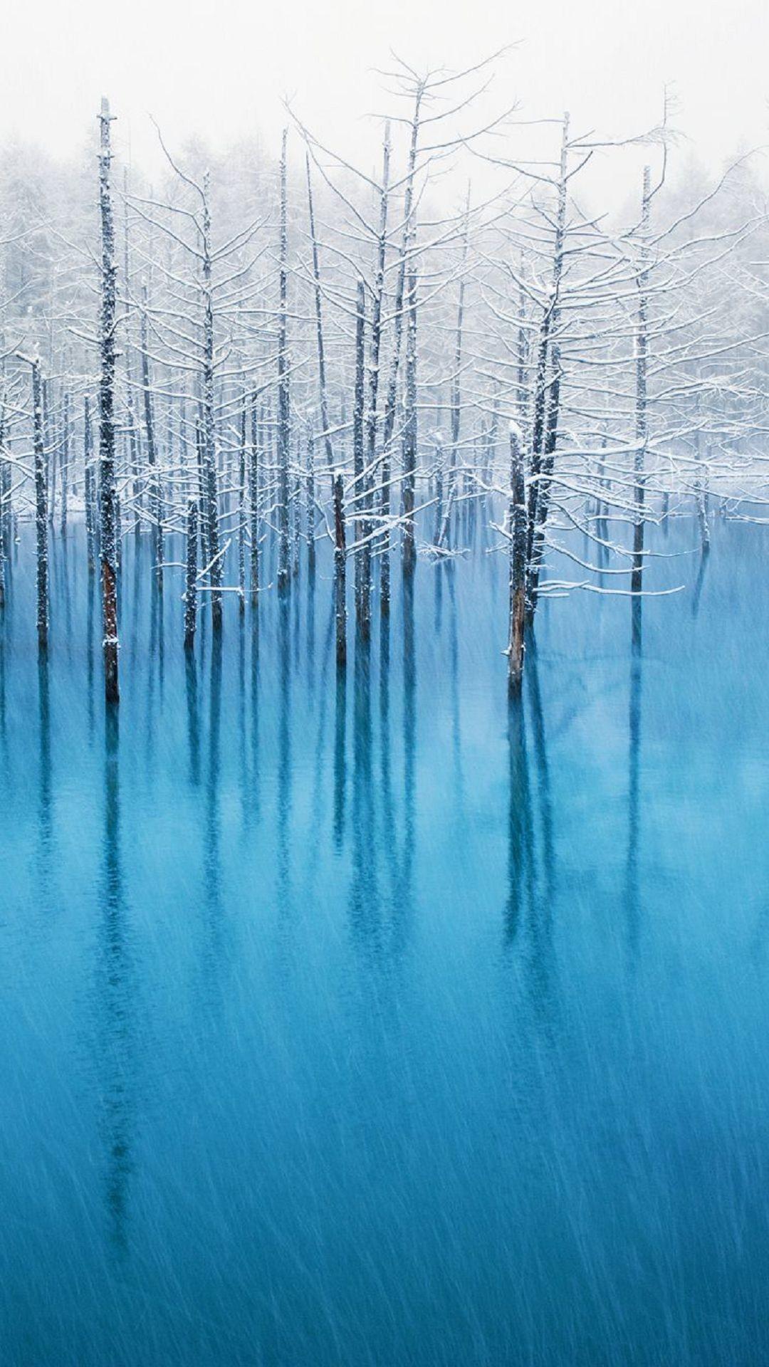 Winter Trees Lake iPhone6s Wallpaper