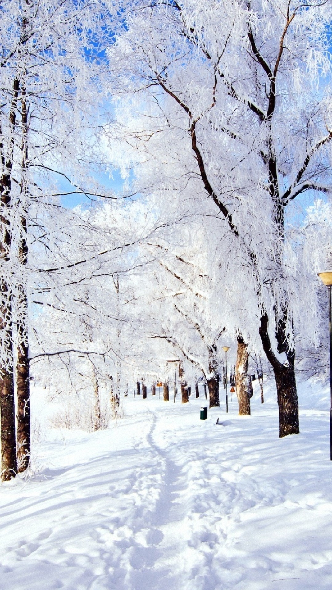 Snow Trail in winter