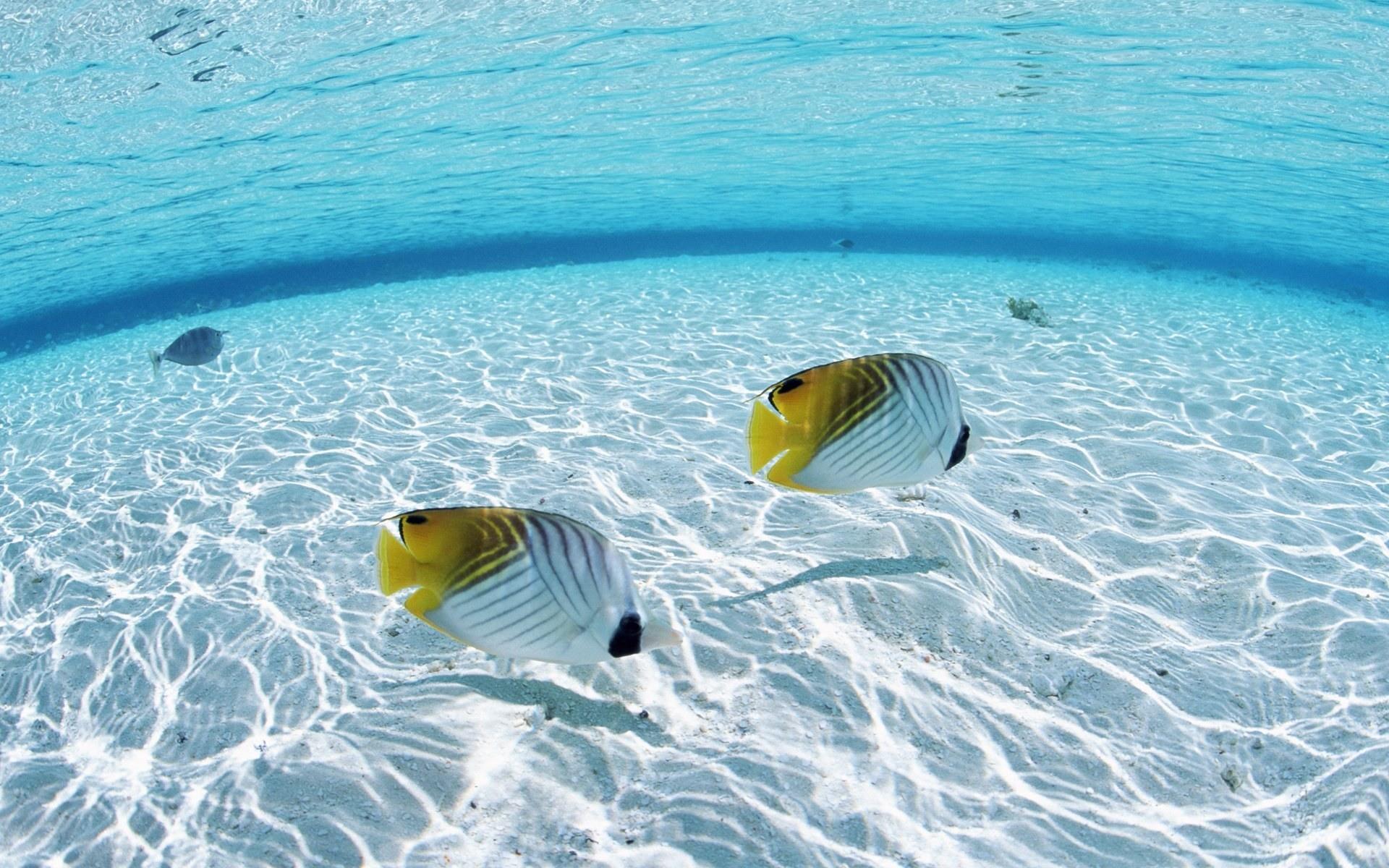 Ocean Animals Wallpaper