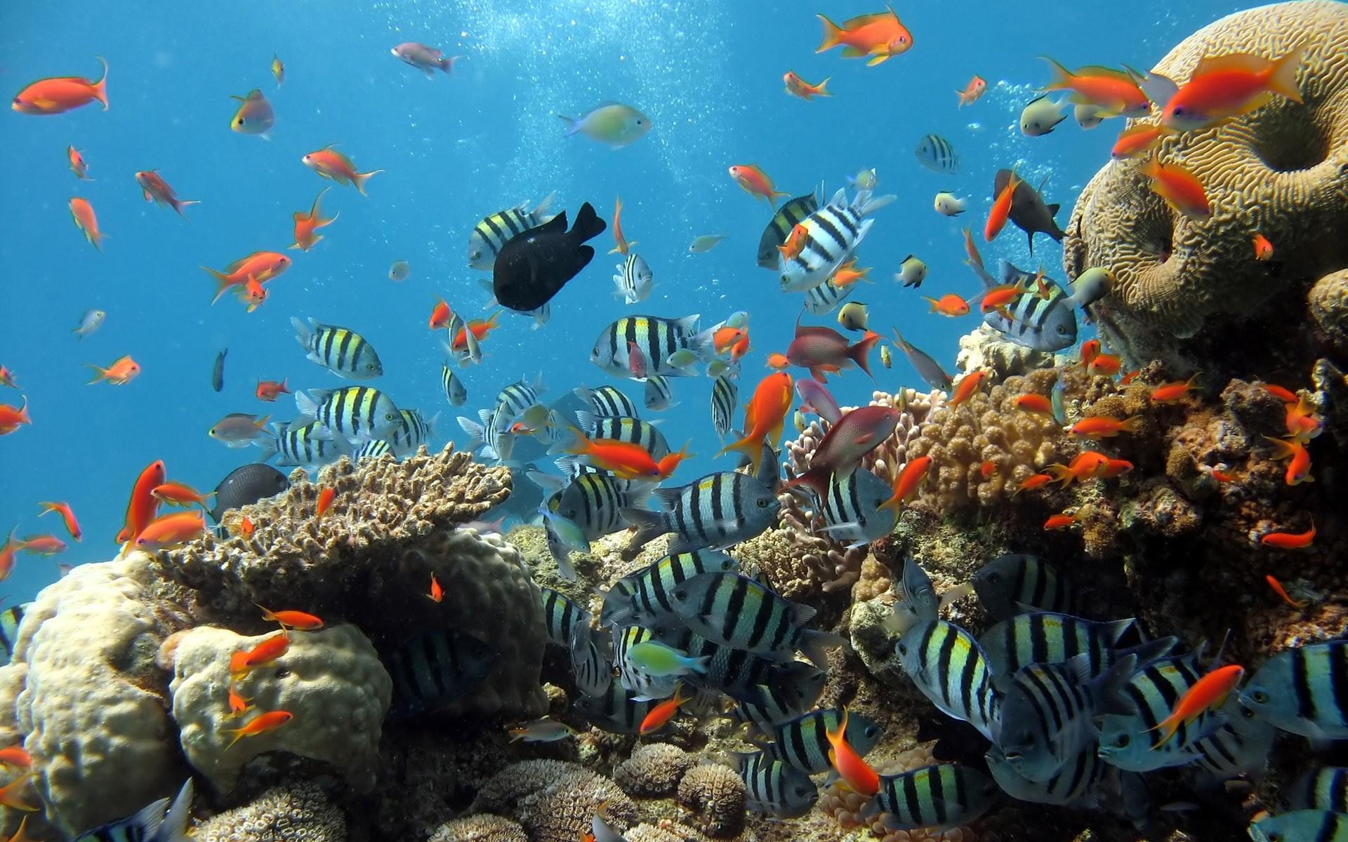 ocean fish – Ocean Fish Wallpaper