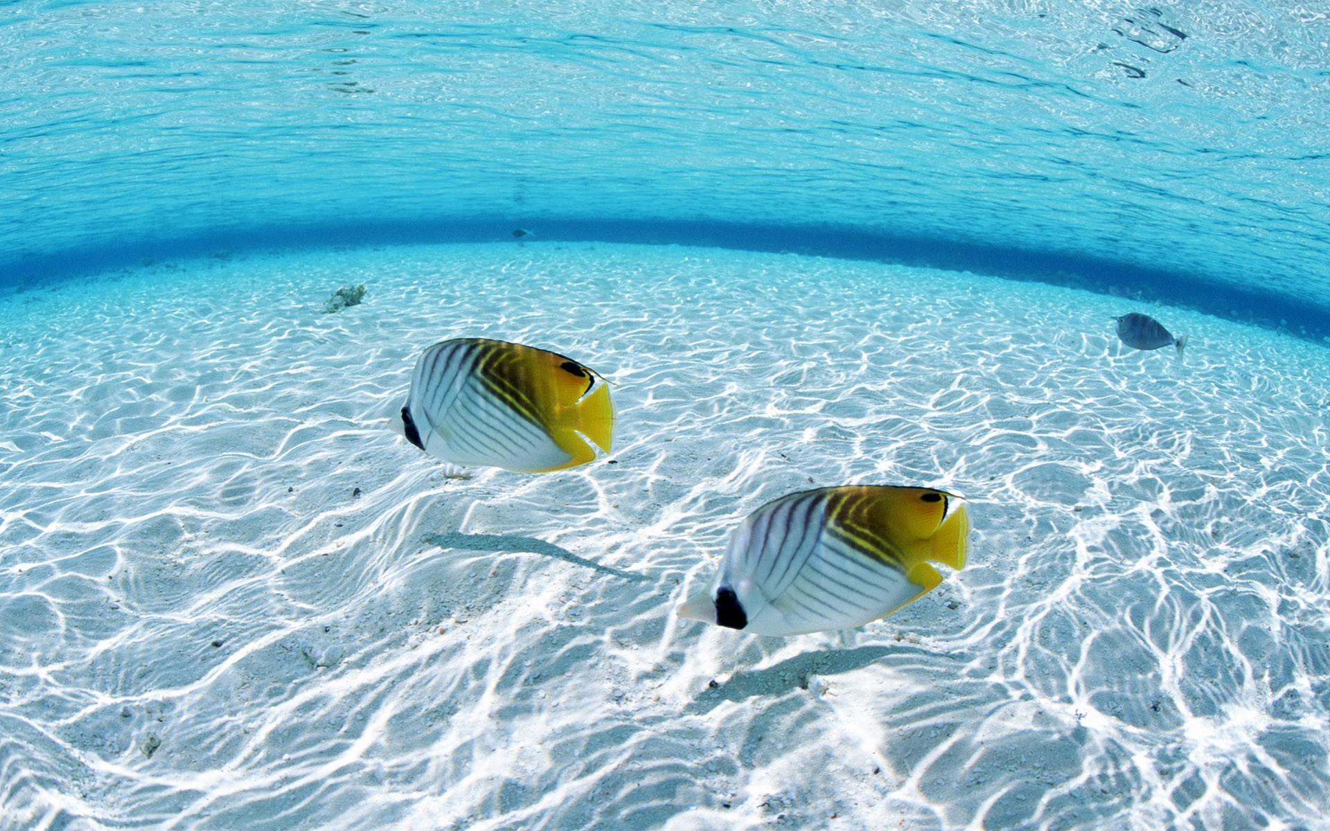 fish, Sea, Animals, Nature Wallpapers HD / Desktop and Mobile Backgrounds