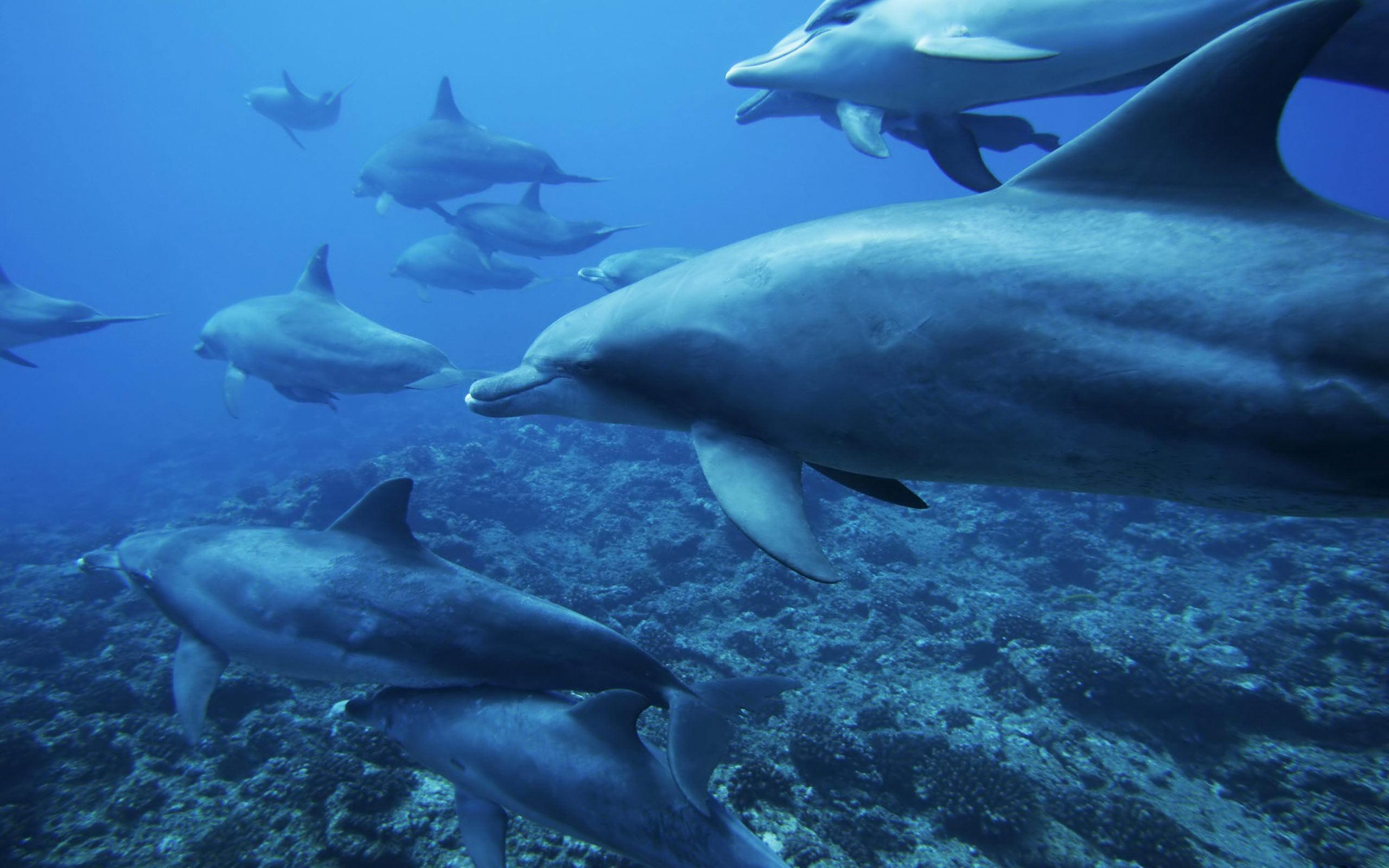 Ocean Animals – Animals Wallpaper (27960345) – Fanpop fanclubs