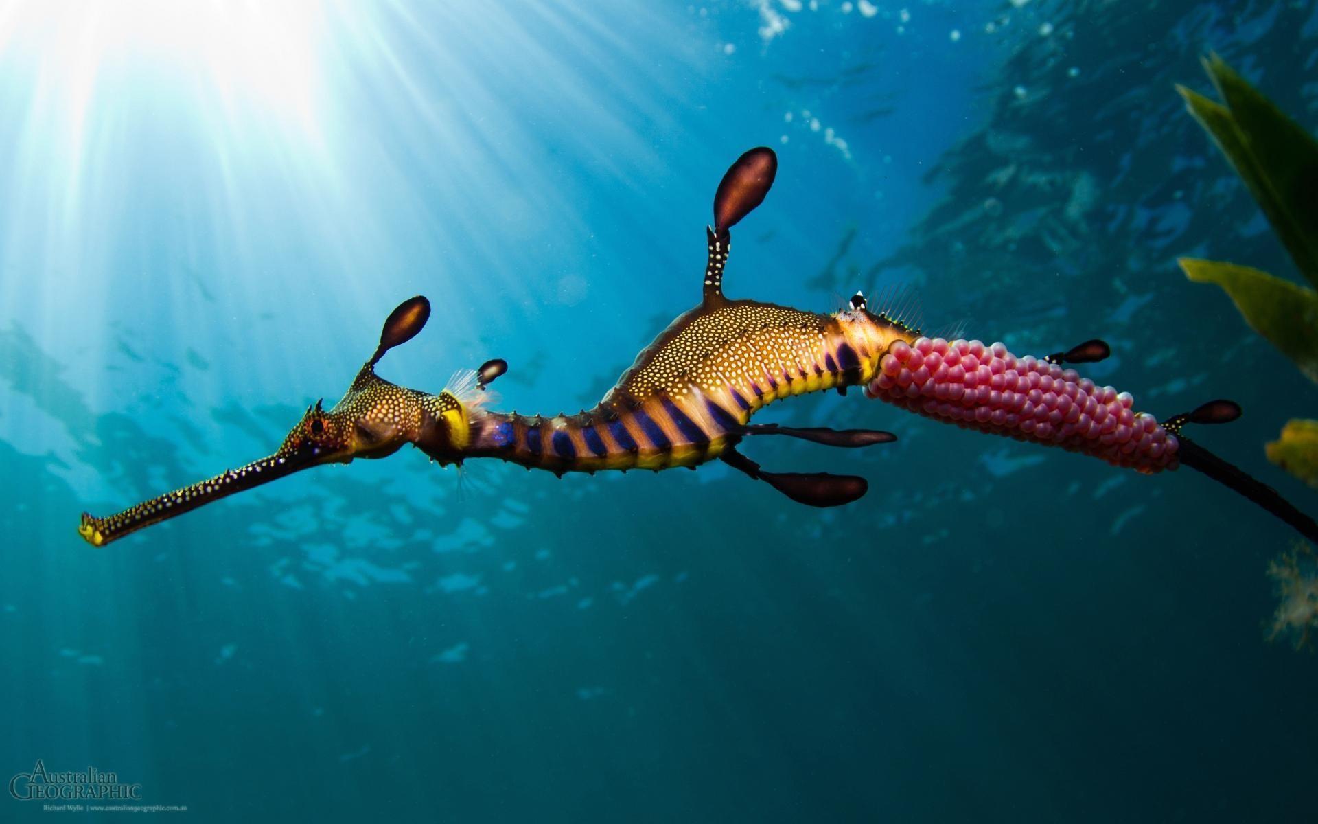 <b>sea animals</b> | <b>Ocean Animals<