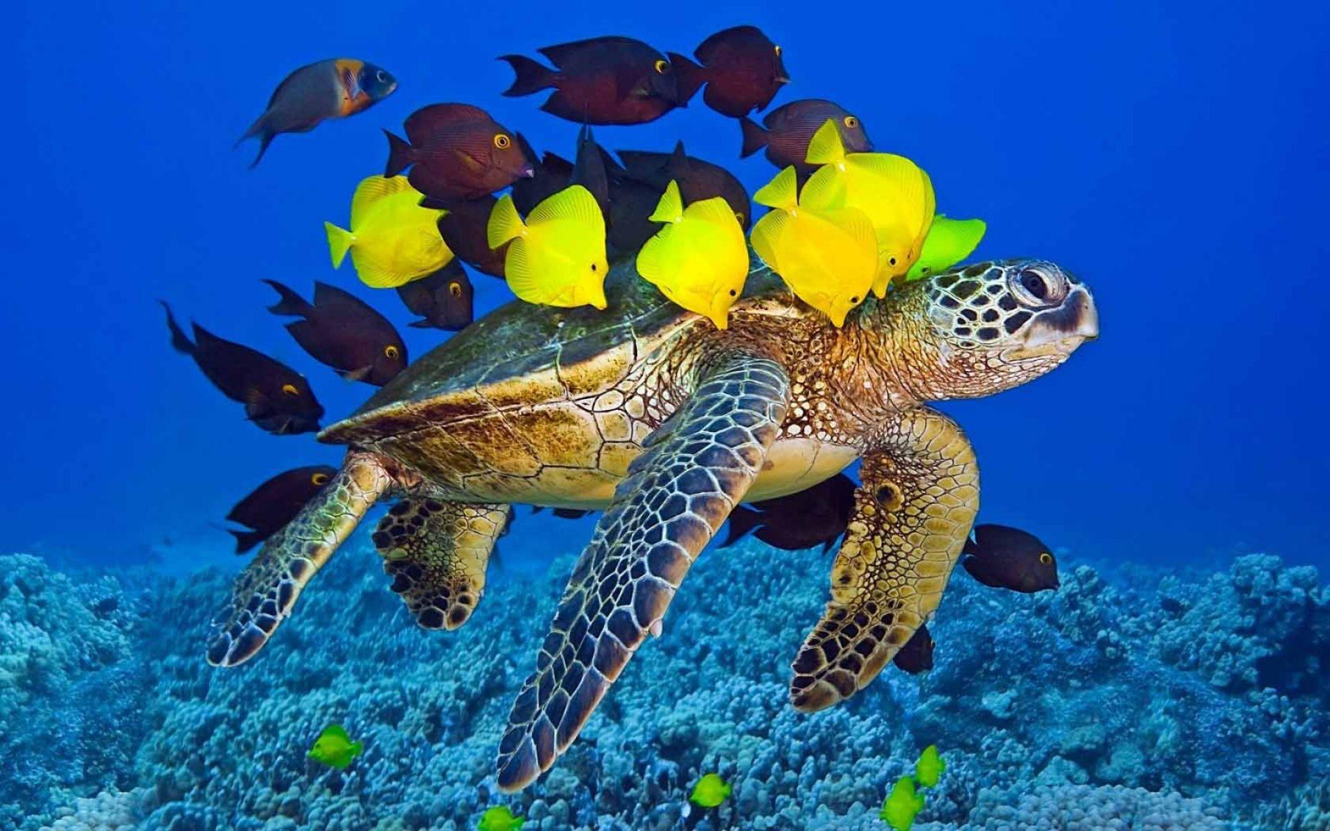 Turtle Yellow Fish Underwater Ocean | HD Animals and Birds Wallpaper Free  Download …