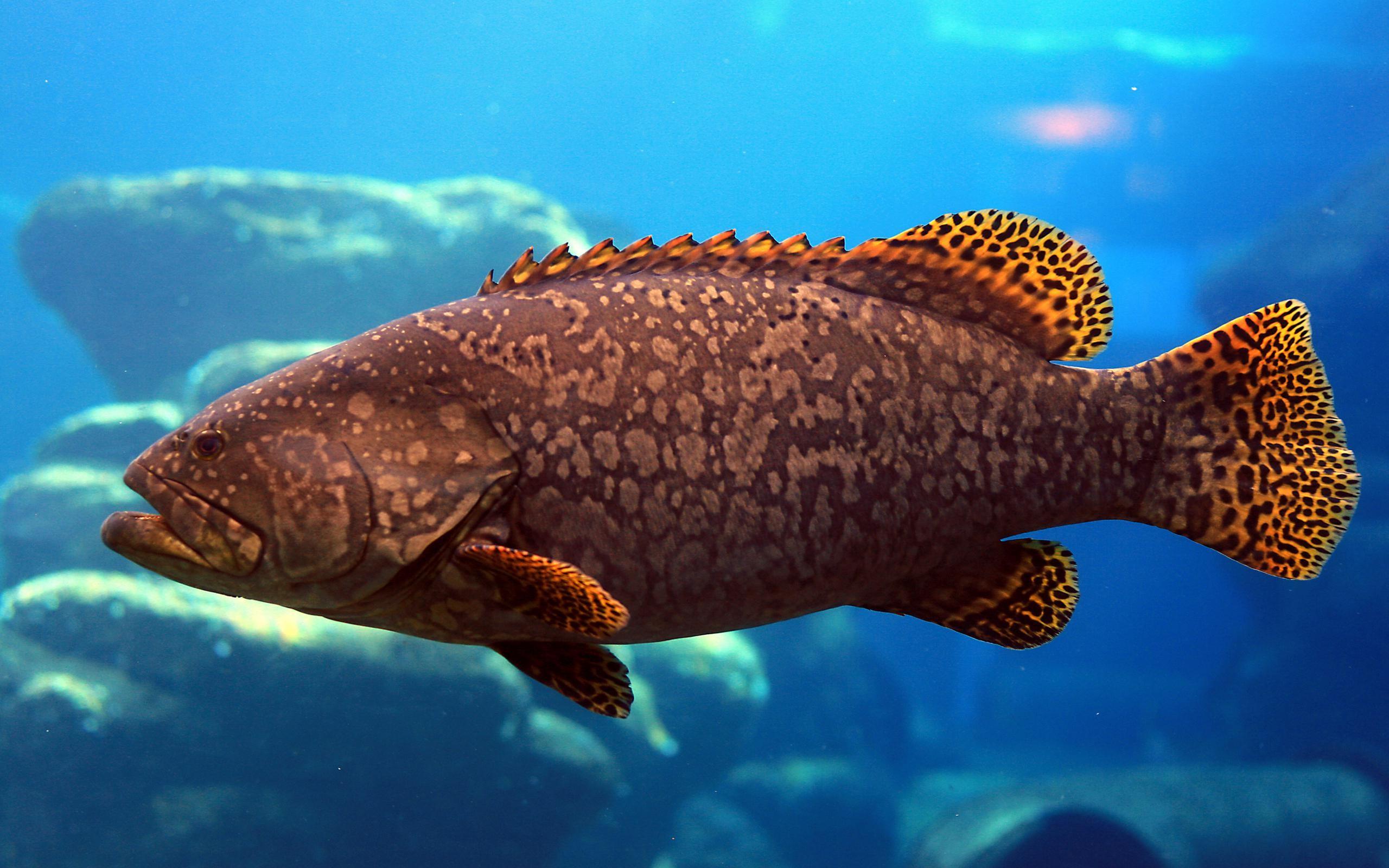 Ocean-fish-wallpaper-HD-backgrounds-desktop