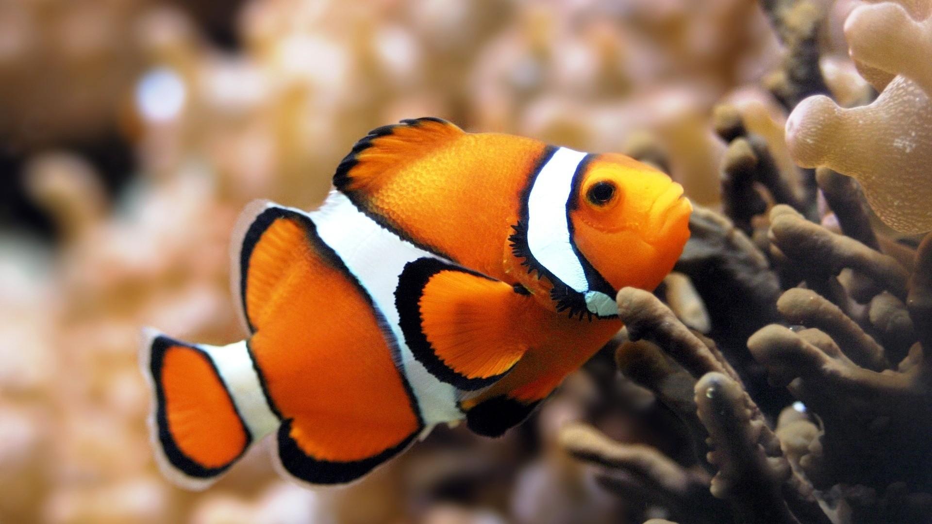 Preview wallpaper fish, underwater, color, swim, sea, ocean 1920×1080