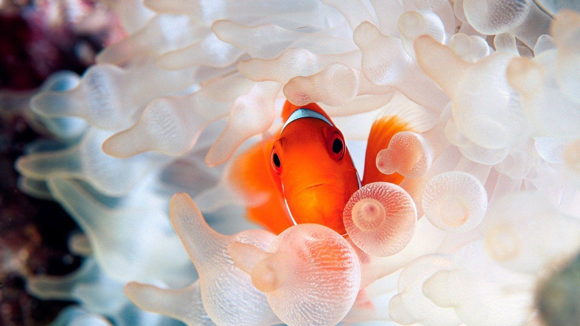 Tropical Fish HD Wallpaper