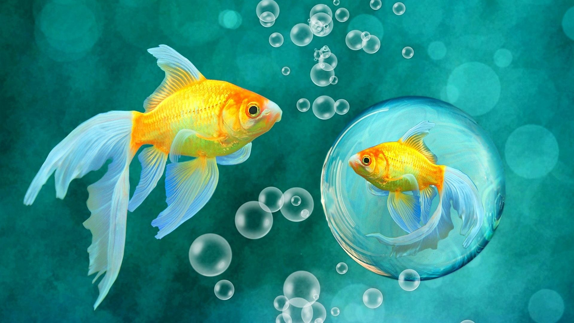 #55BBCC Color – Ocean Underwater Sea Sealife Fish Fishes Nature Desktop  Themes Free Download for
