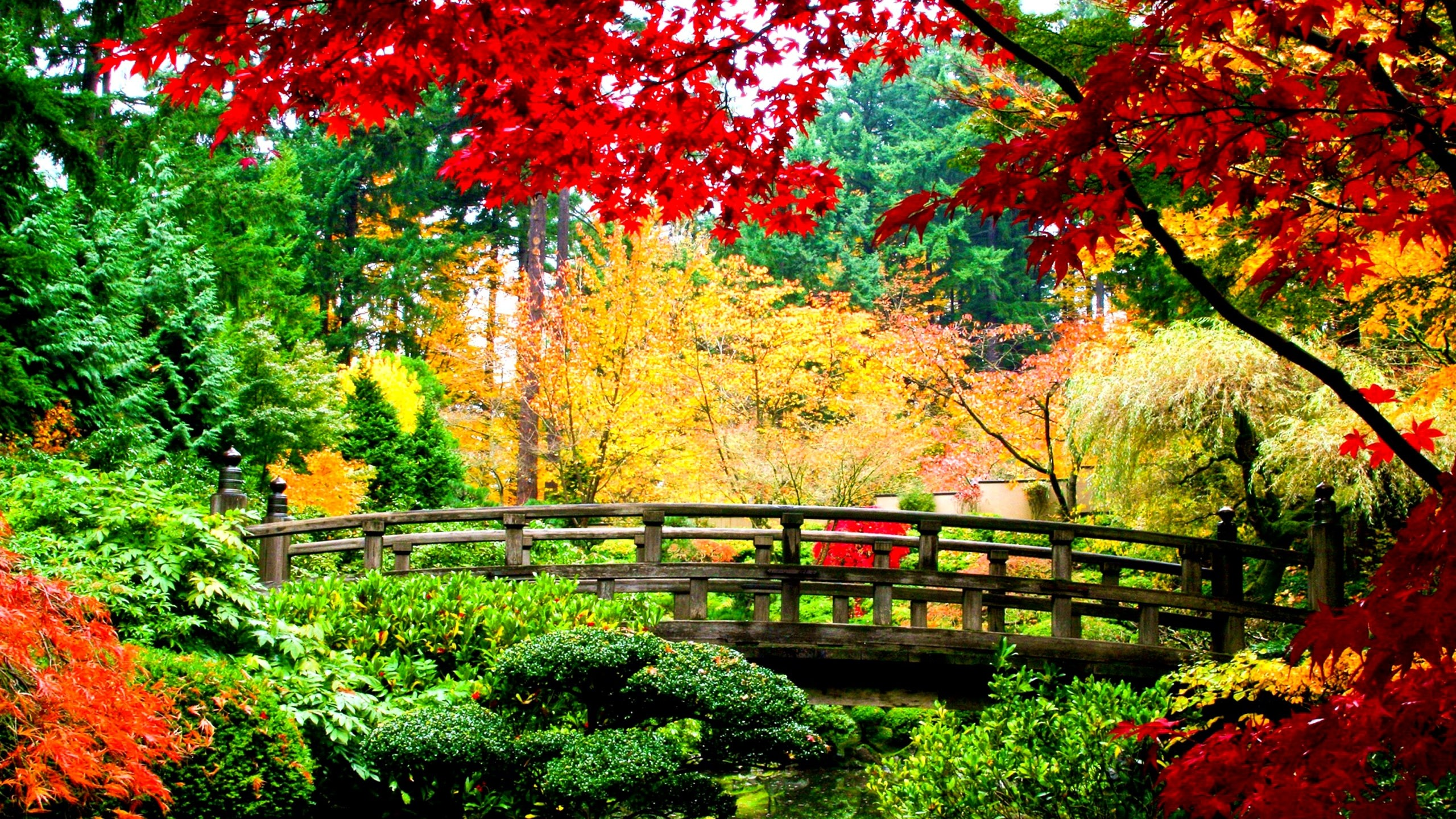 Usa garden autumn portland japanese shrubs trees nature wallpaper – Find  This Pin And More On
