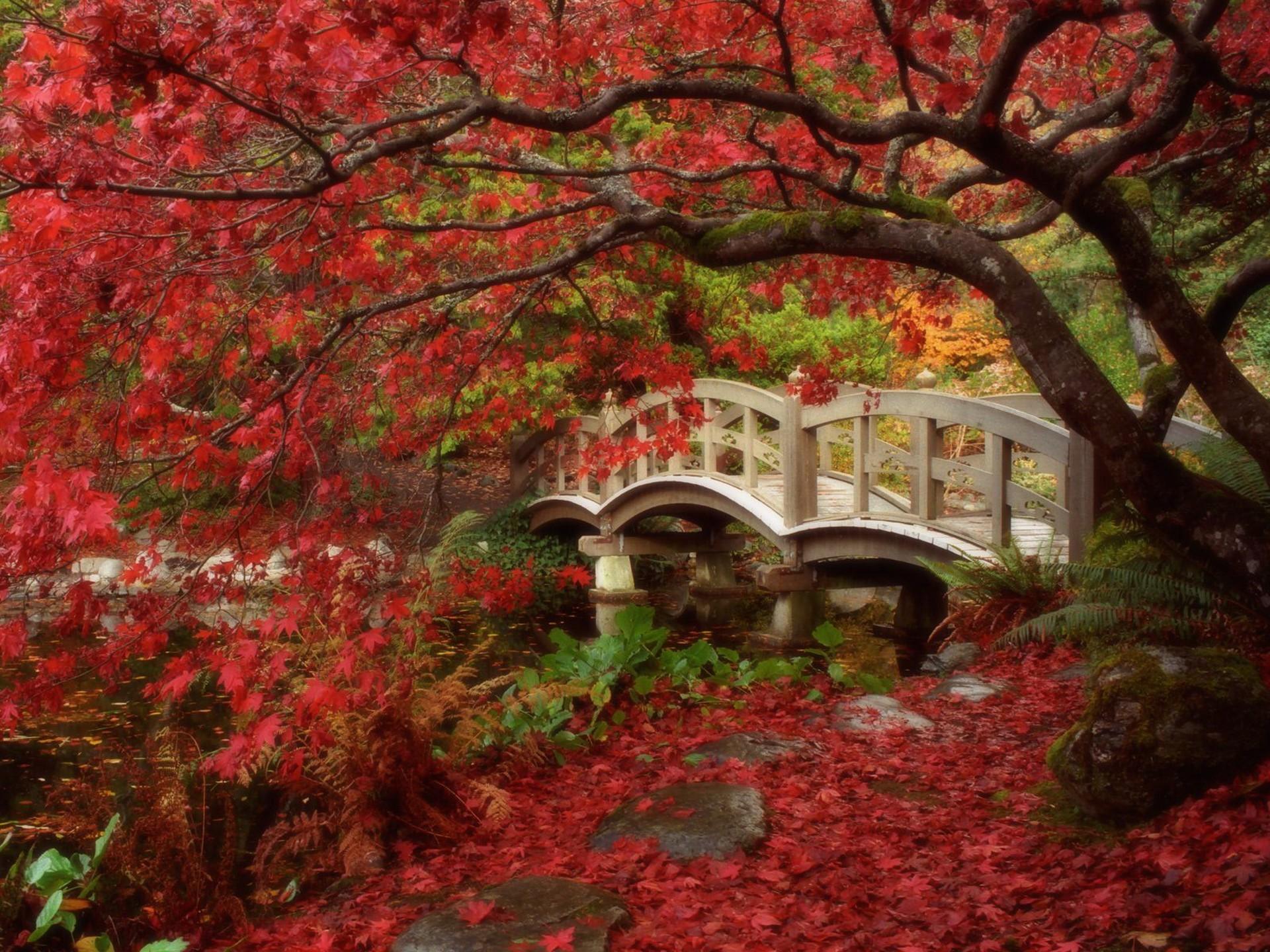 /japanese-garden-royal-garden-free-desktop-background-free