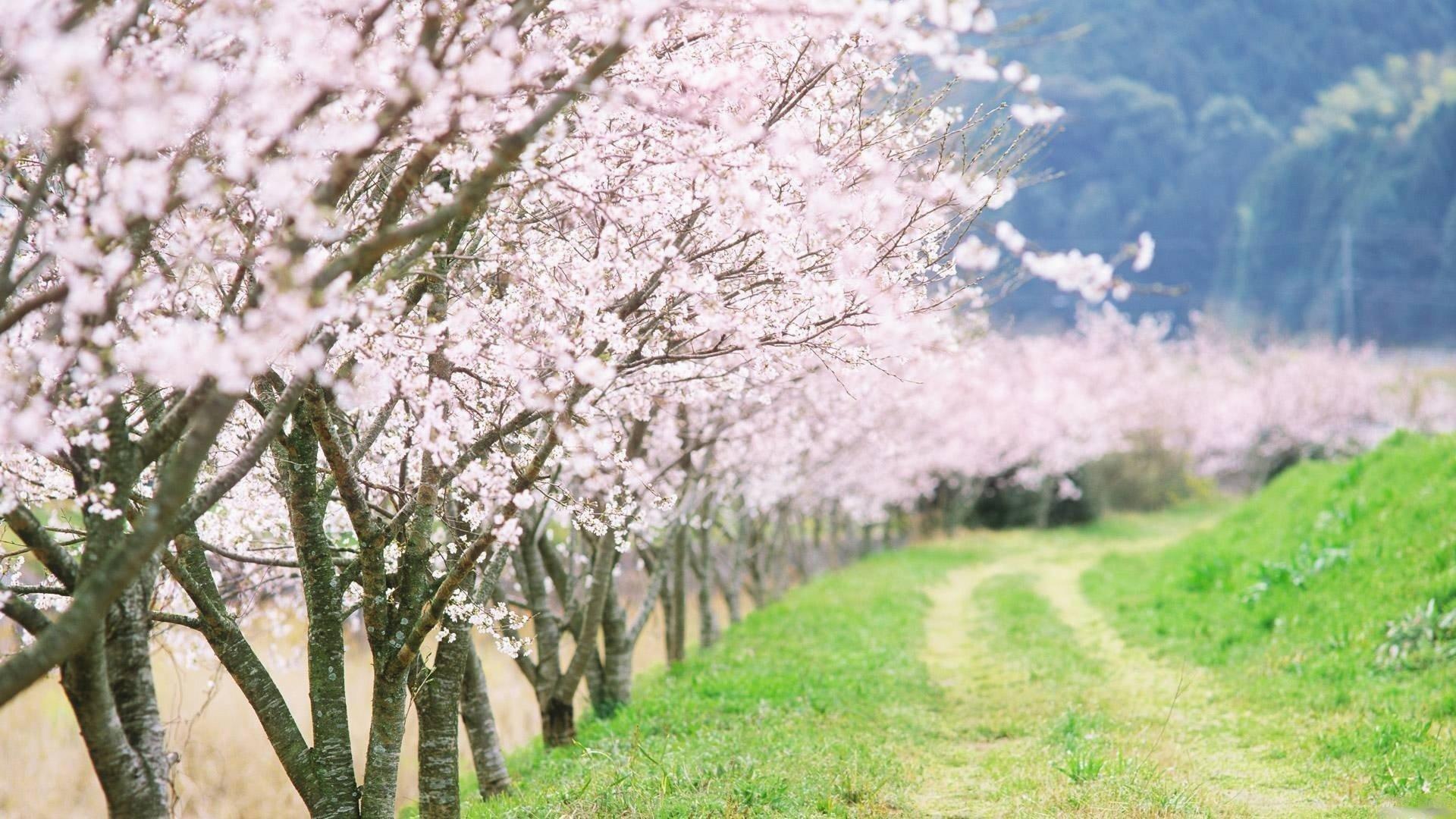 7. japanese-flower-wallpaper7-600×338