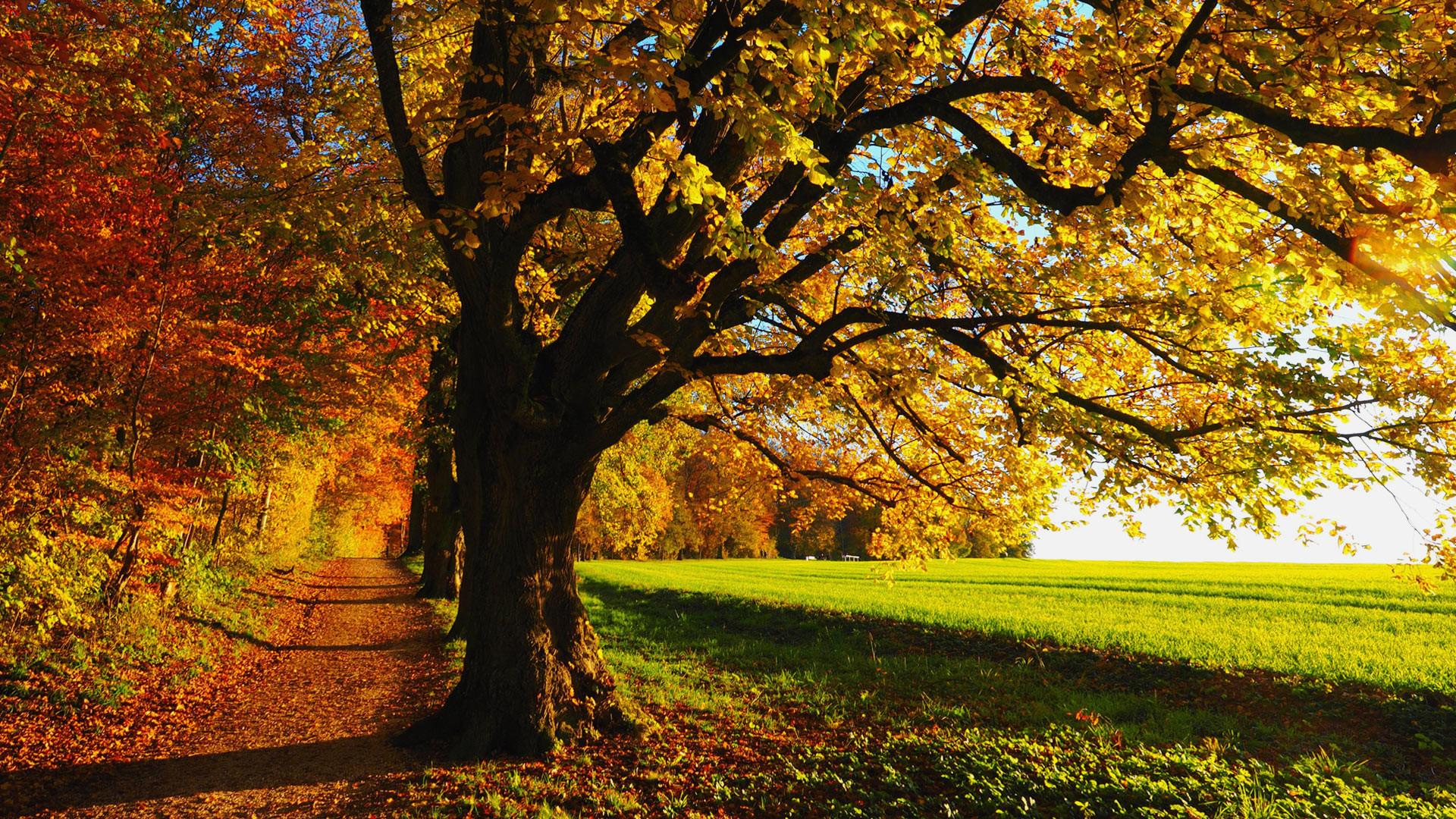 Fall Scenery Image HD.