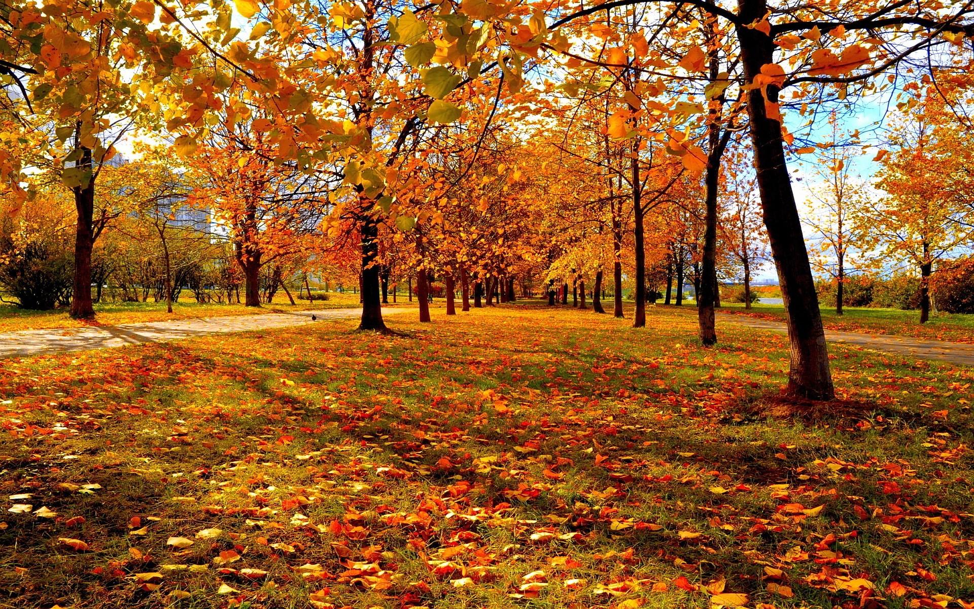 fall wallpaper pack 1080p hd
