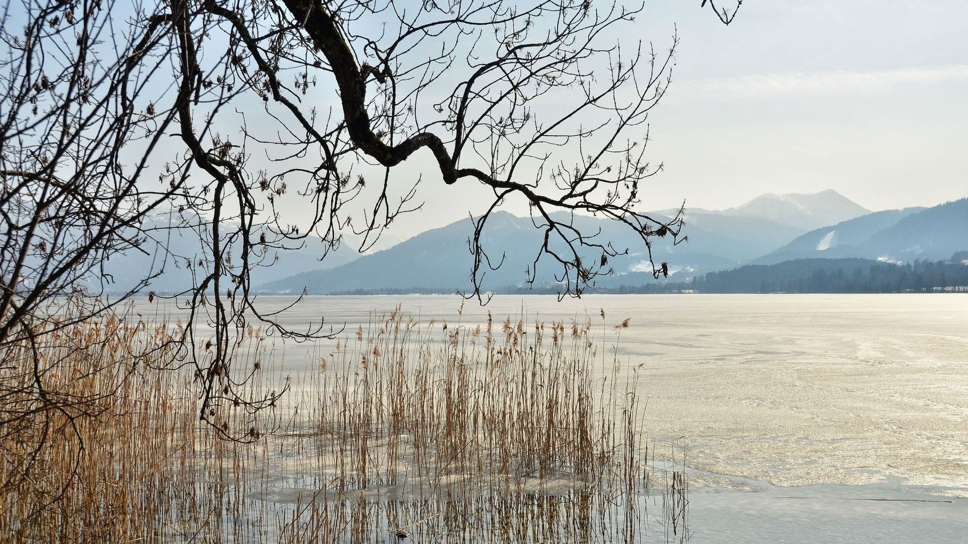 Winter Tag – Tree Branches Winter Frozen Grass Dry Lake Pictures Photo  Nature for HD 16