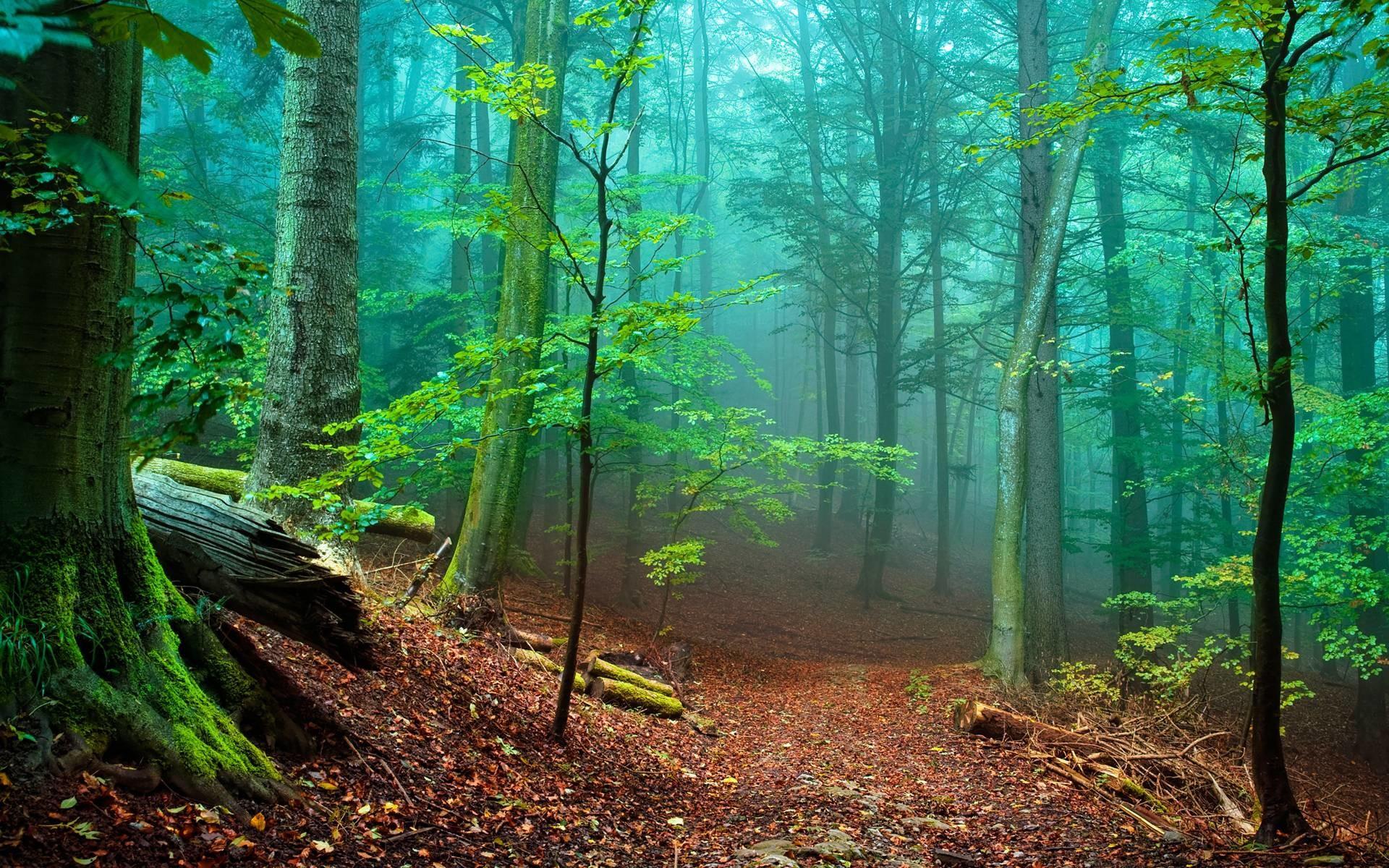 Beautiful Forest – Wallpaper HD