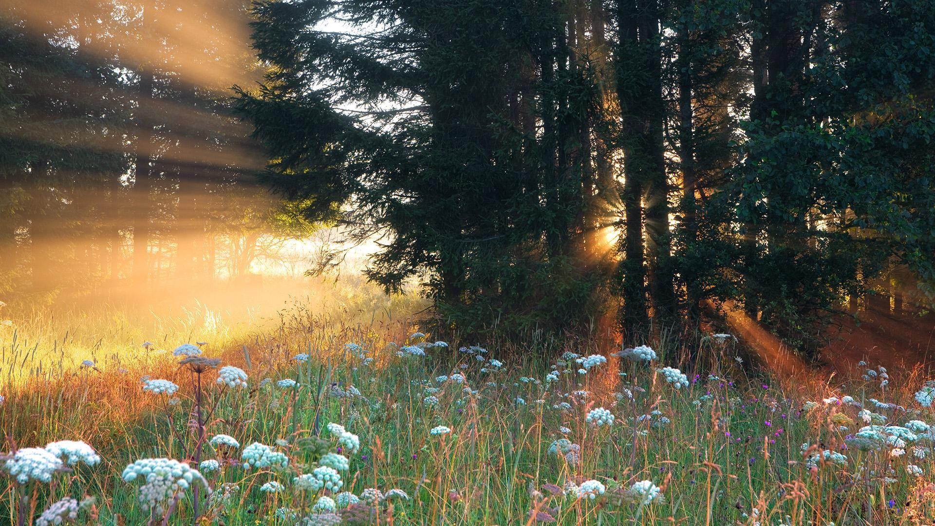 Beautiful Forest Wallpaper 36808