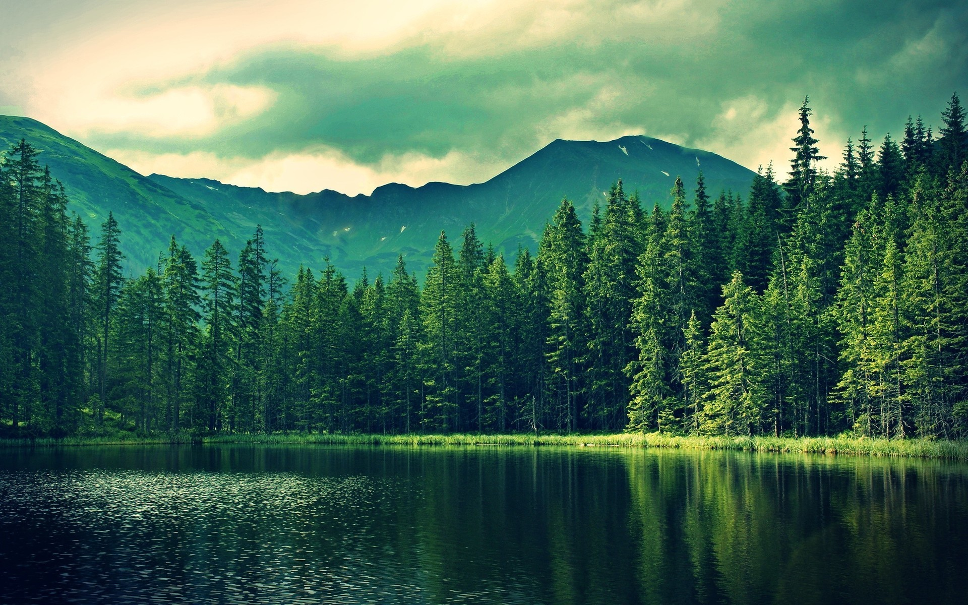 15 – Forest Desktop Wallpapers – Free Photography Wallpapers .