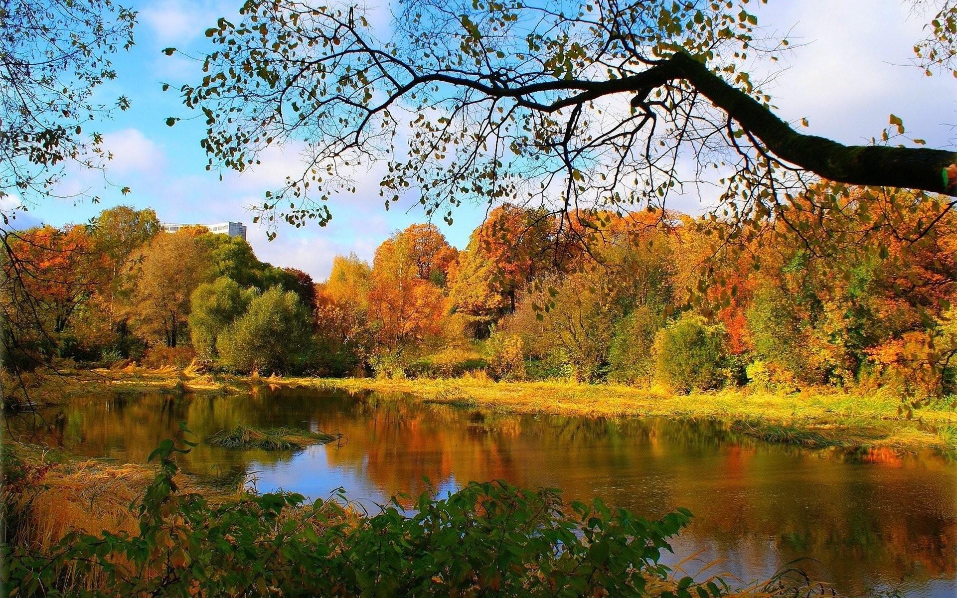 Beautiful Forest Wallpaper 524488