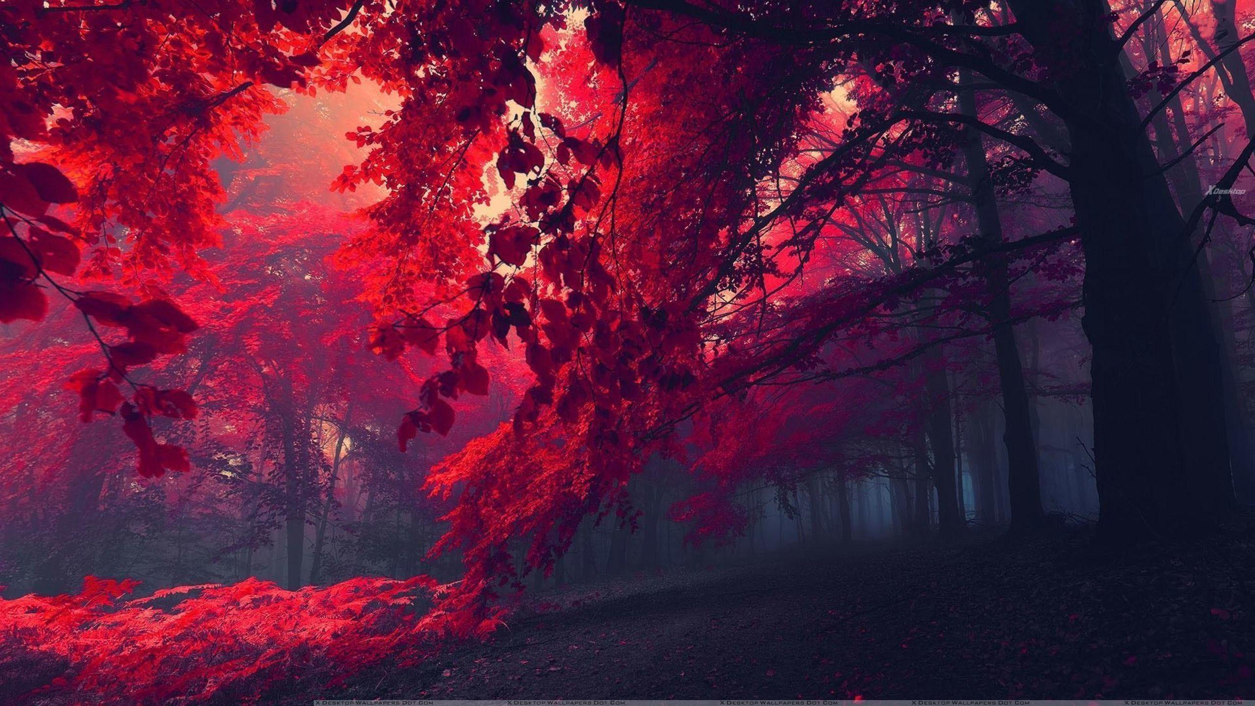 Red forest Nature desktop wallpaper, Forest wallpaper, Tree wallpaper –  Nature no.