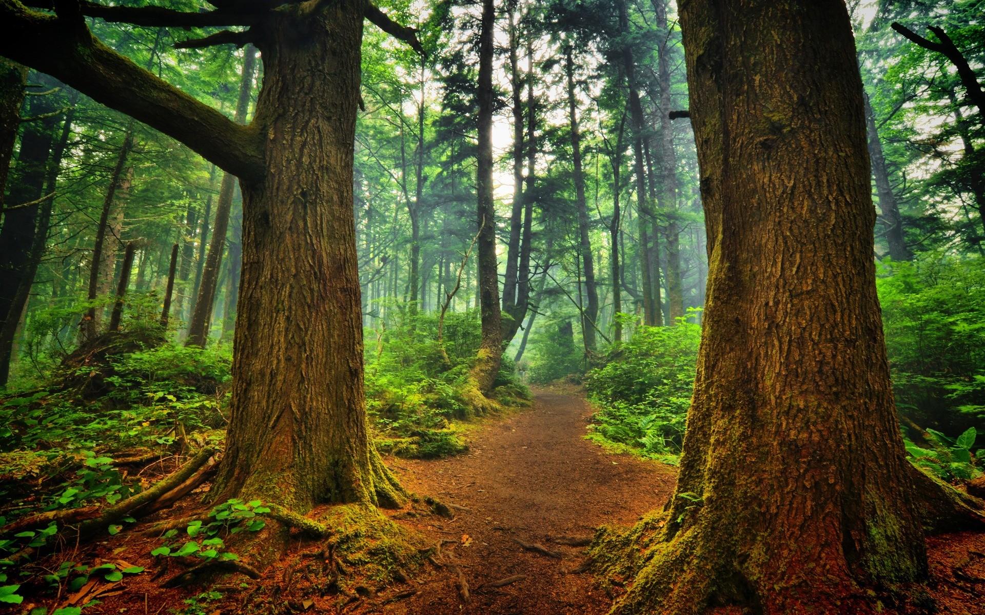 La Push forest Wallpaper Landscape Nature