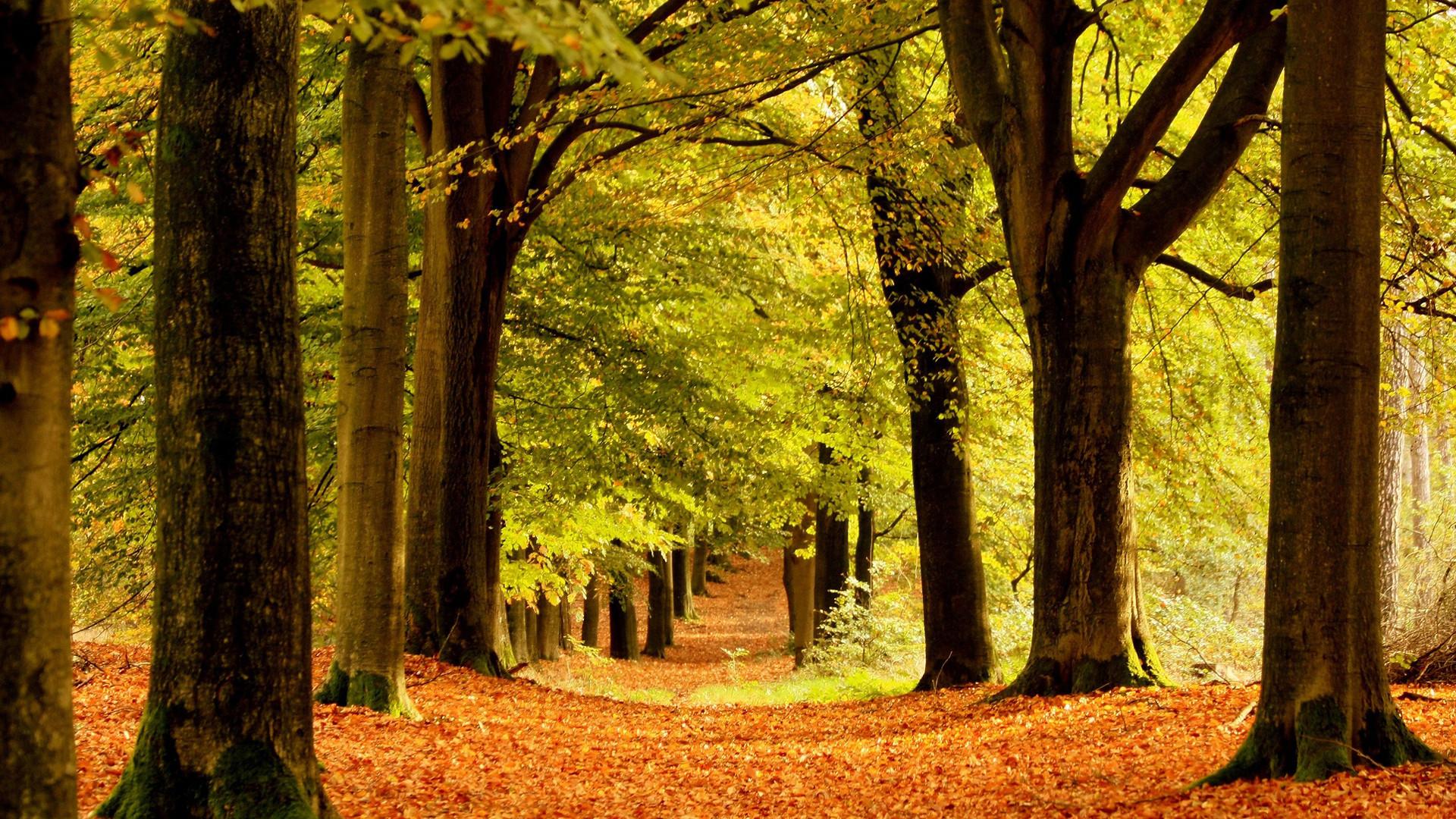 Hd Beautiful Forest Fall Leaf Autumn Wallpaper   Free Wallpaperd