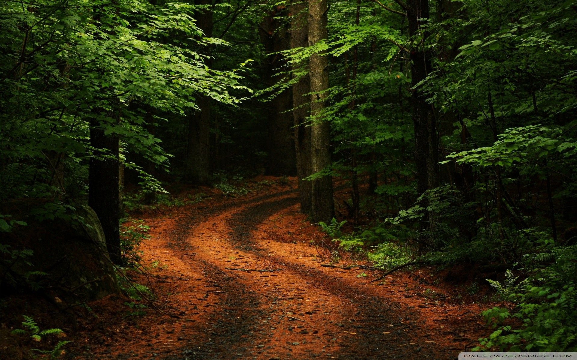 beautiful forest wallpaper[1920×1200] via Classy Bro