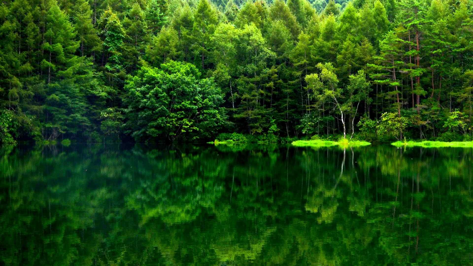 Beautiful Green Forest HD Wide Wallpaper for Widescreen (37 Wallpapers) –  HD Wallpapers