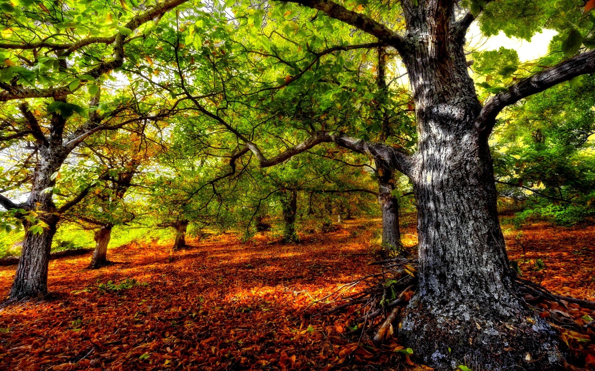 Gorgeous HDR Forest Wallpaper