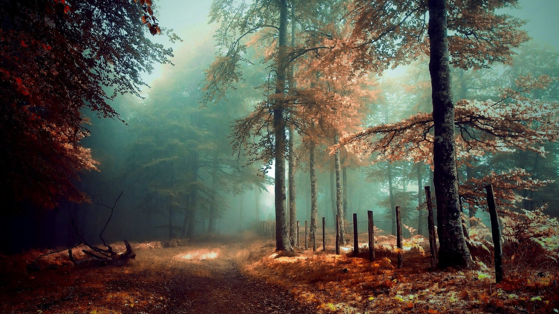 Forest – Mystic Autumn Grass Path Trees Beautiful Forest Fog Fence Leaves  Miri Wallpapers Dark for
