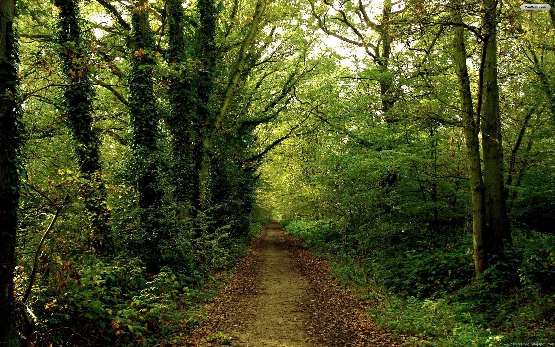 In Forest Beautiful Forests Green Nature Road Trees