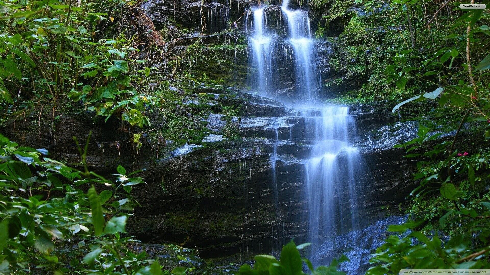 Beauty Forest Waterfall Wallpaper