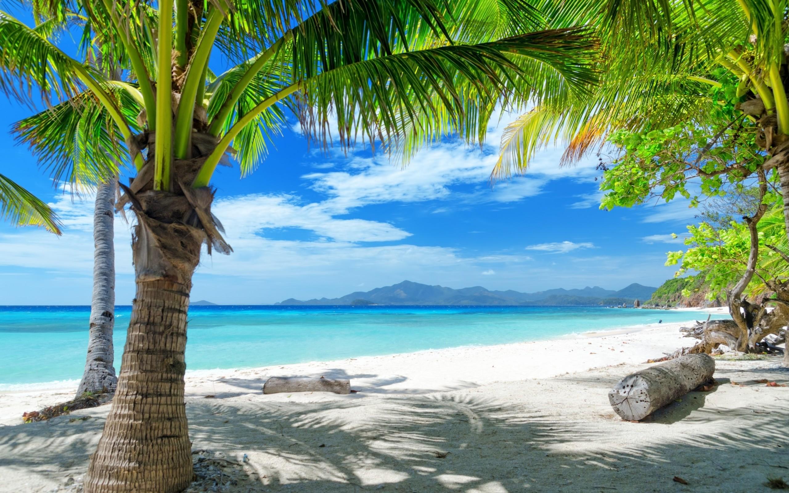 Tempting ocean beach with palm trees HD Desktop Wallpaper   HD Desktop .
