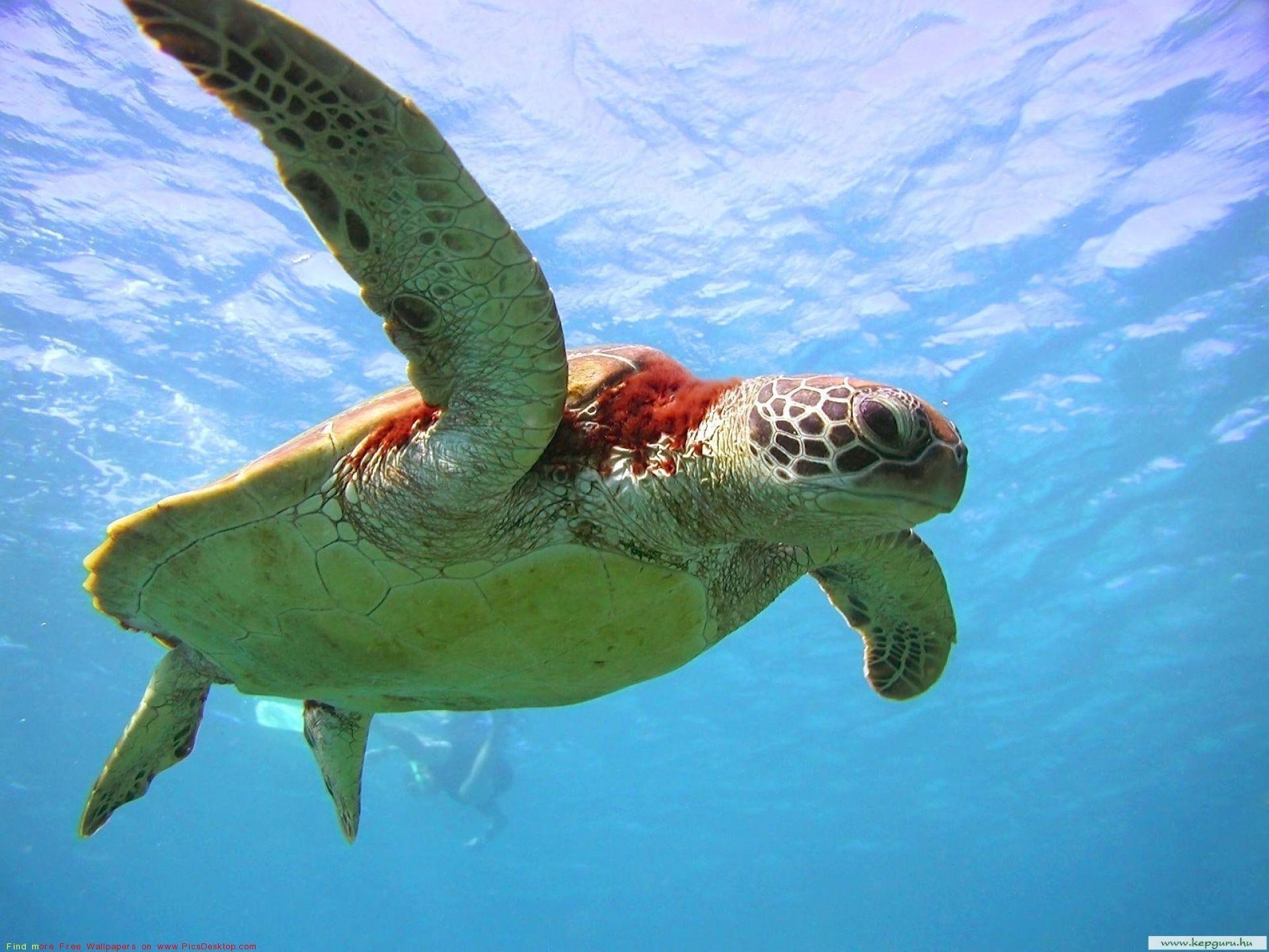 Ocean Life Free Desktop Backgrounds collection. #31