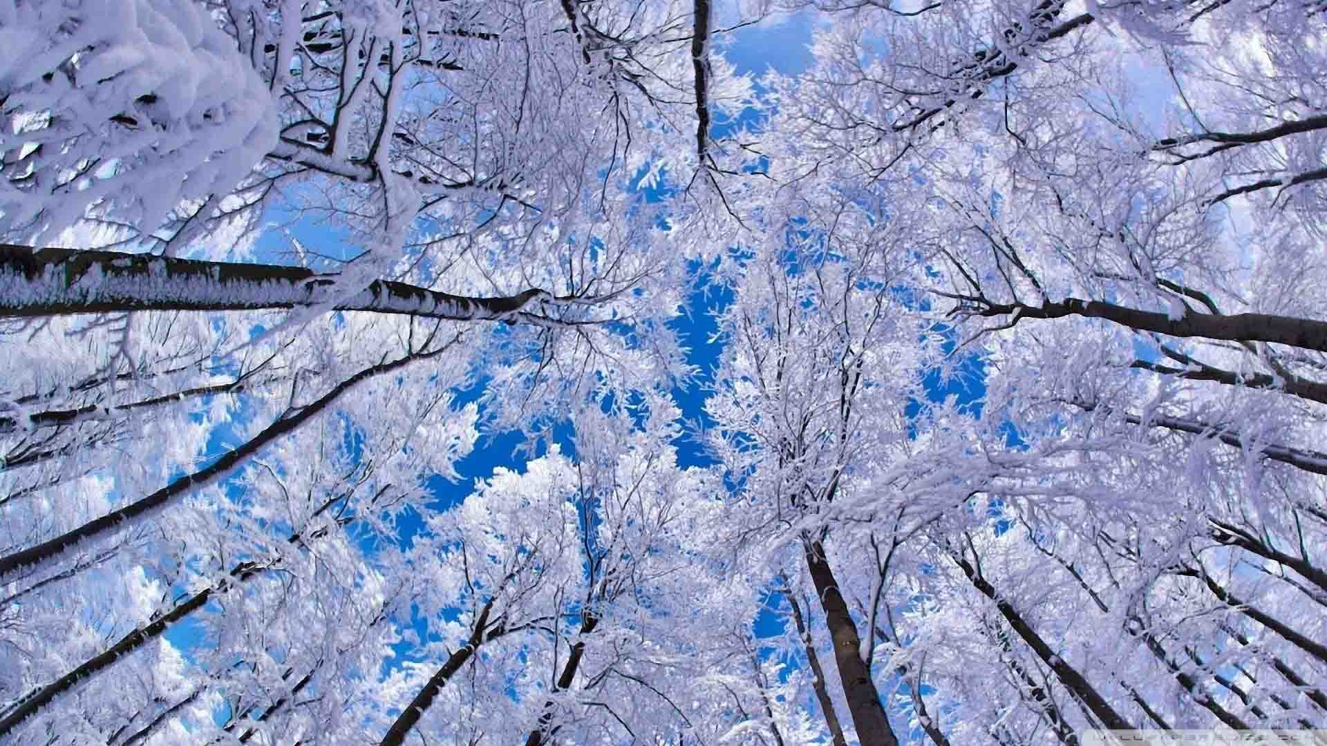 Free Winter Backgrounds Wallpapers Wallpaper
